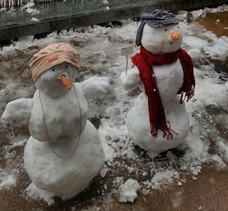 Schneemenschen bei Amaryllis